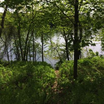 Hatchery Brook Campsite