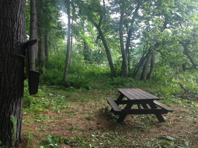 Stephan's Campsite